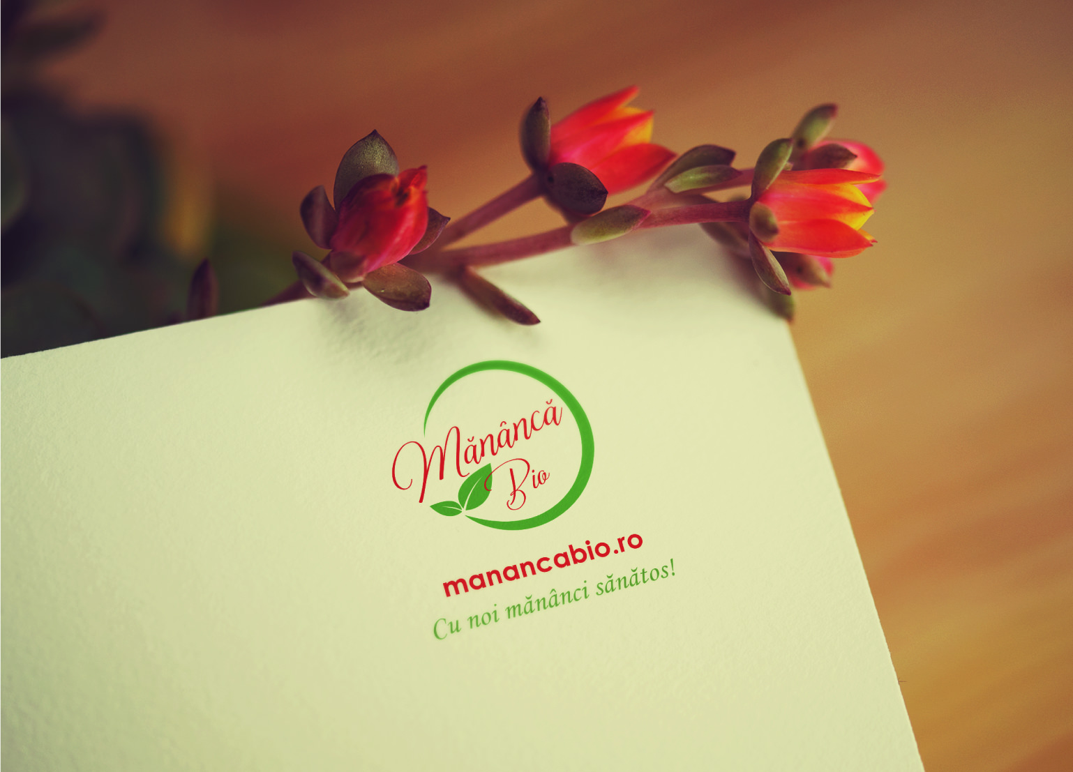 logo-design-website-romania